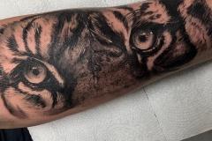 realismo-blanco-y-negro-annie-blesok-grande-brazo-antebrazo-retrato-tigre-