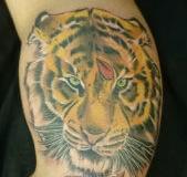 inferno-tattoo-barcelona-raul-leone-tigre-color-brazo-biceps-febrero-2017-1-169x300