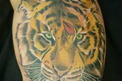inferno-tattoo-barcelona-raul-leone-tigre-color-brazo-biceps-febrero-2017-1-576x1024