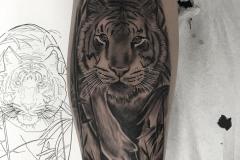 inferno-tattoo-barcelona-realismo-alex-baens-grande-brazo-tigre